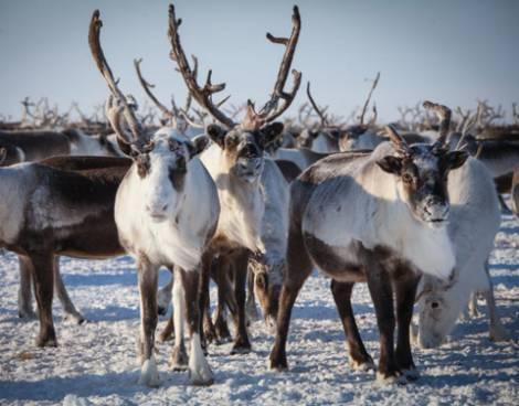 В госпрограммах Республики Саха (Якутия) появятся арктические разделы