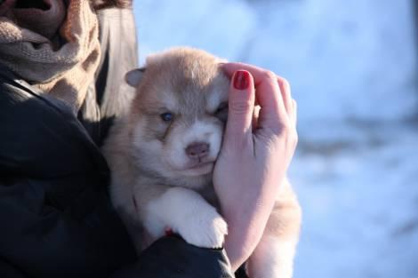 Новый этнокультурный центр открыт на Камчатке на базе питомника ездовых собак