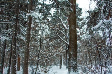 В Хабаровском крае решили положить конец беззастенчивому воровству