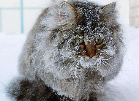 В Приморье ожидается аномально холодная погода