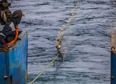 В Приморском крае будут добывать новые виды моллюсков, высоко ценящихся в АТР