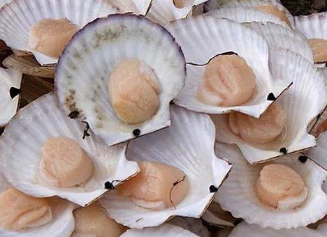 Крупная морская ферма для разведения гребешка и мидии появится в Приморье