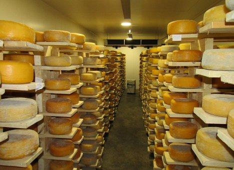 Для производства сыров в Приморье везут закваски из Италии