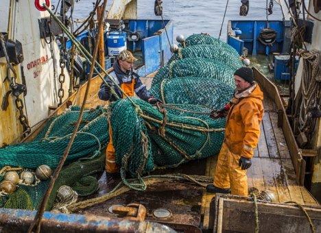 Рыбодобывающие предприятия Приморья выловили почти 30 тысяч тонн минтая