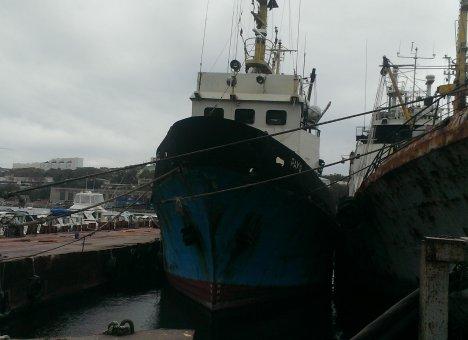 В Приморье инвесторы ждут добро на строительство береговых рыбных комбинатов