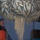 Российскую рыбу снова хотят поделить