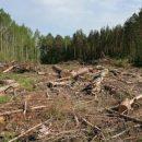 Климатическая лихорадка захватила Приморье