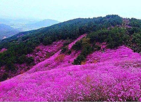 Владивосток хотят сделать розовым