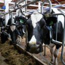 Приморский край обеспечит витаминами и пробиотиками всех коров Дальнего Востока