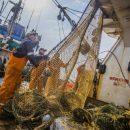Приморские рыбаки выловили тысячу тонн палтуса