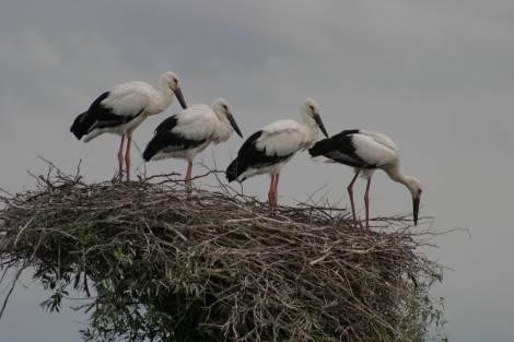 В День птиц