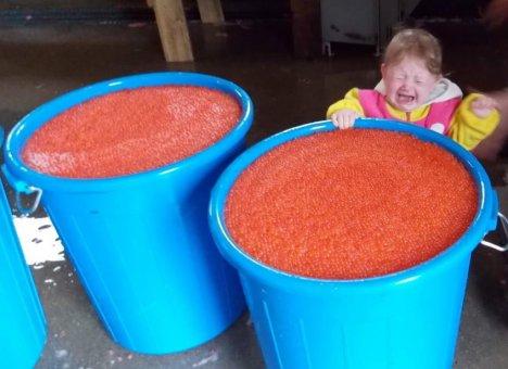 Владивосток ожидает дефицит лосося и красной икры, как в 70-е годы