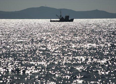 Акционеры крупной приморской компании недосчитались прибыли