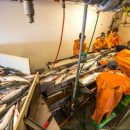 В Приморье построят рыбоперерабатывающий завод за 1,5 миллиарда рублей