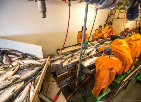 В Приморье построят рыбоперерабатывающий завод за 1,5 млрд рублей