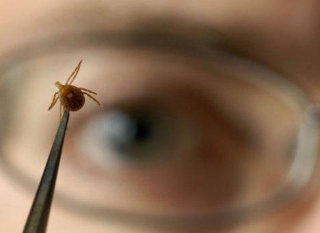 Обнаружен новый вариант вируса клещевого энцефалита