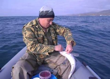 Владивостокские рыбаки сообщают о небывалых уловах