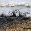 Берег на Океанской загадили военные, чистит – городская служба