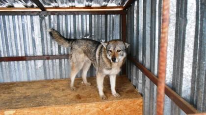 Девять бродячих собак отловили с начала недели в Петрозаводске