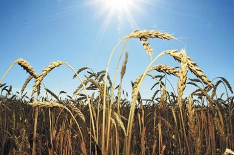 В Приморье ждут новых производителей органических продуктов