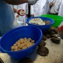 В Приморье подсчитали морской урожай