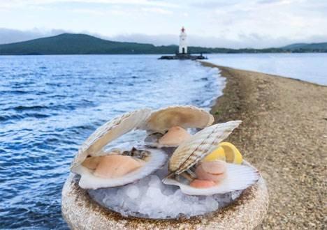 Во Владивостоке аквариумы ресторанов заполняют свежим гребешком