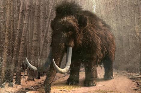 В Якутии бизнес по добыче и продаже бивней мамонта выведут из тени