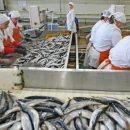 Рыба не может попасть в Свободный порт