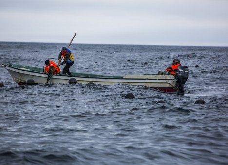 Более 9 тысяч гектаров морских акваторий под аквакультуру разыграют на ВЭФ в Приморье