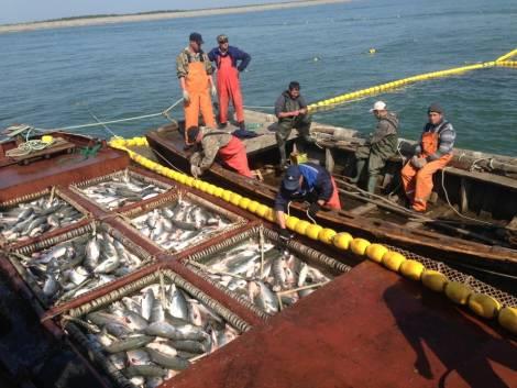 Хабаровский край поборется за заказы на строительство рыболовецкого флота