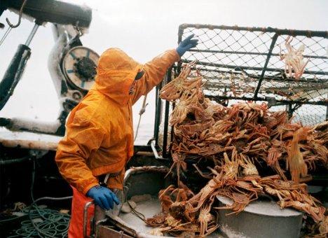 Из-за аукционов прибрежные регионы могут лишиться доходов от крабового промысла