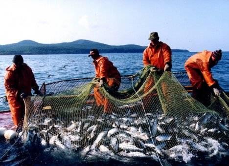 К западному побережью Камчатки подошел небывалый объем лосося