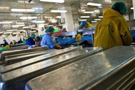 На Шикотане завершается строительство уникального рыбоперерабатывающего завода