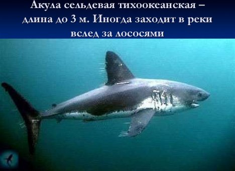 Во Владивостоке температура побила рекорды и подогнала к берегу акул и медуз