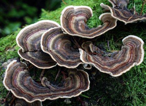 Обнаружены грибы, которые помогают в лечении рака