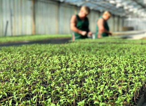 Производители экологически чистой продукции в Приморском крае получат господдержку