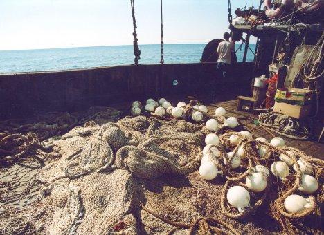 Росрыболовство подставило дальневосточных рыбаков