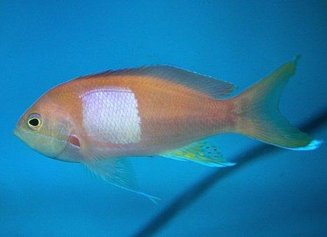 Почти 40 тропических рыб пополнили коллекцию Приморского океанариума