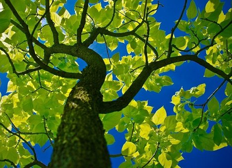 Деревьям на Верхнепортовой дали шанс дождаться осени