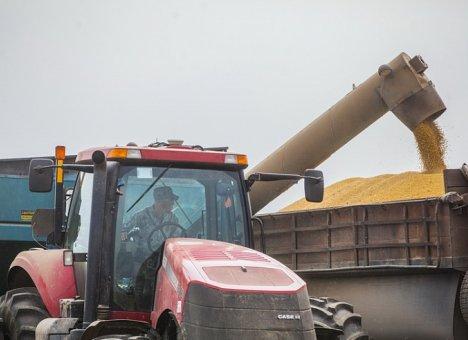Более 9 тысяч тонн пшеницы намолотили аграрии Приморья