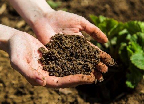 В Приморском крае оказалась самая грязная земля в России