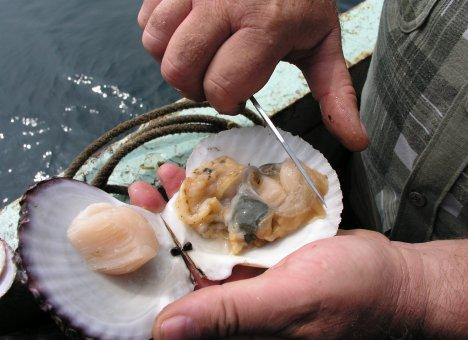Китайцы подсели на приморские морепродукты