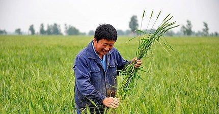 Дальневосточные гектары отдадут китайцам