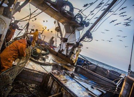 376 тысяч тонн минтая выловили рыбаки Приморья
