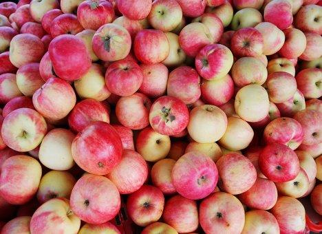 Осенняя ярмарка на центральной площади порадует владивостокцев свежими сезонными продуктами