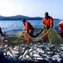 Повышение пенсионного возраста рыбаков Приморья не затронет