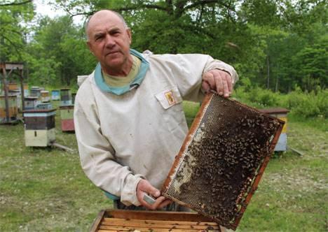Проблемы объединили пчеловодов Дальнего Востока