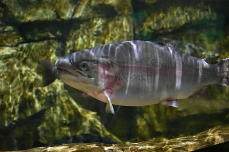 Рыбаки Приморья и жители притоков Амура остались без осенней кеты