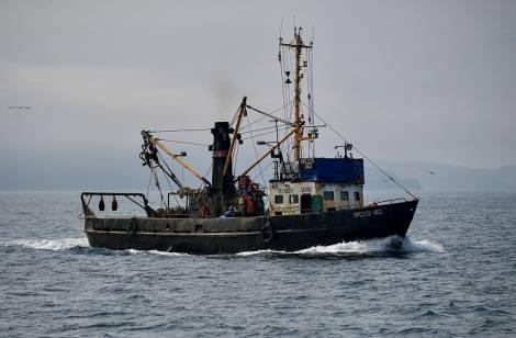 Рыбаки Приморья выловили более 33 тысяч тонн кальмара