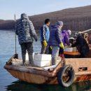 В заливе Владимир отмечено трепанговое изобилие